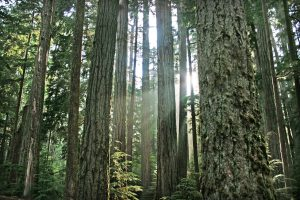 resilience-blog-trees_small